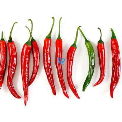 Chili Peppers / Paitan